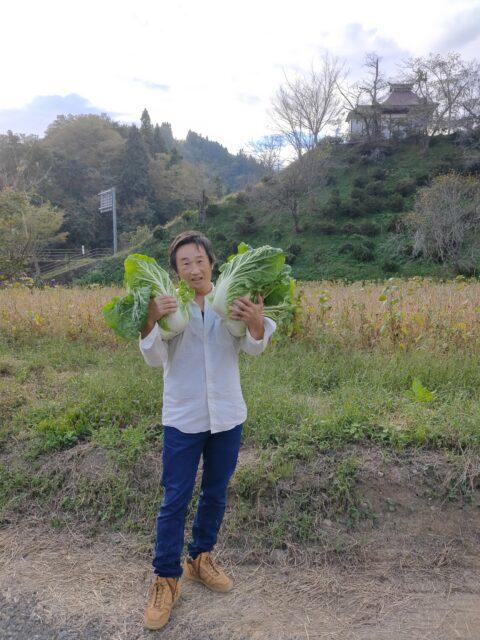 おやき野菜白菜収穫